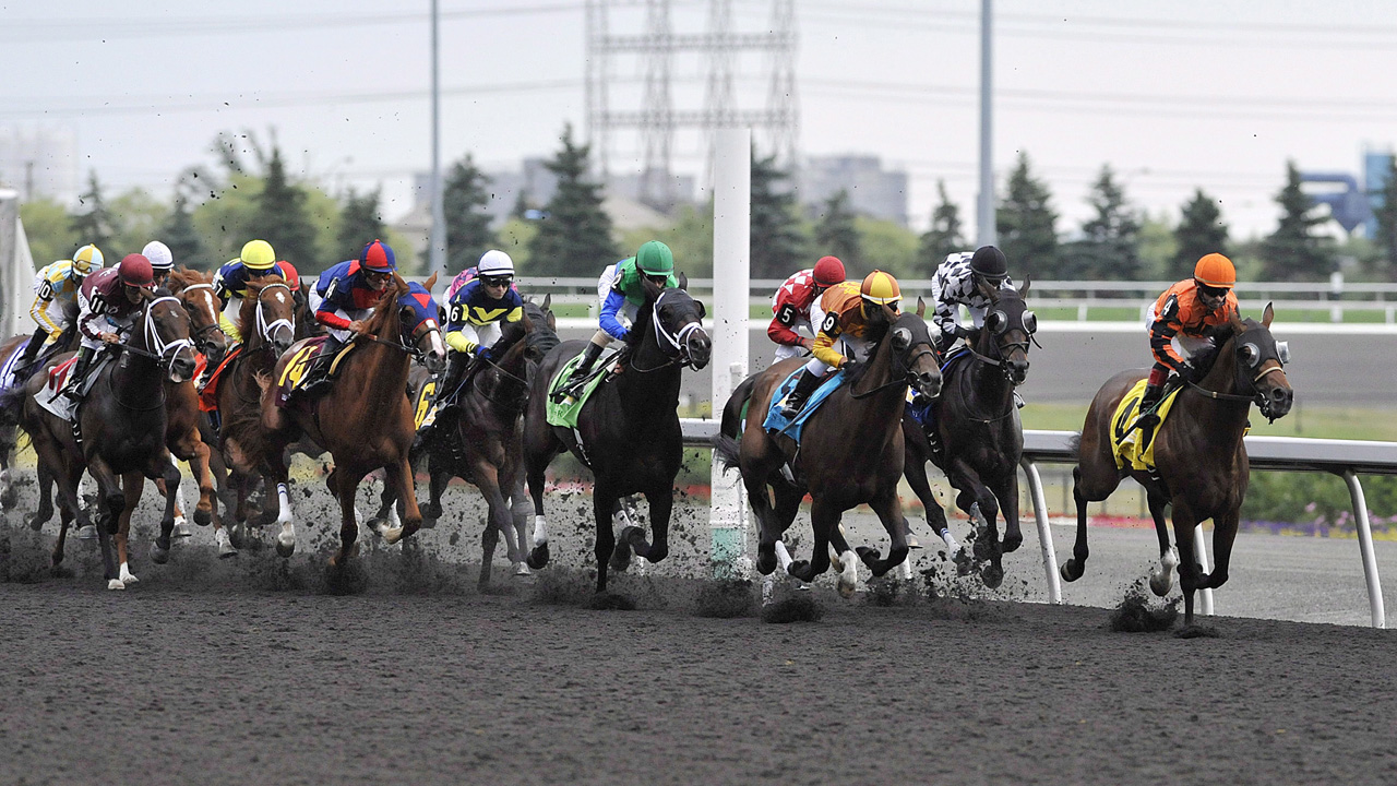 Woodbine Racetrack Live Video